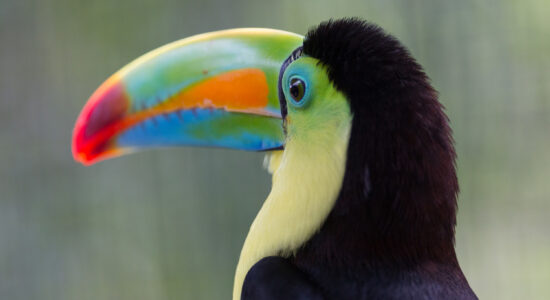 La naturaleza de Costa Rica